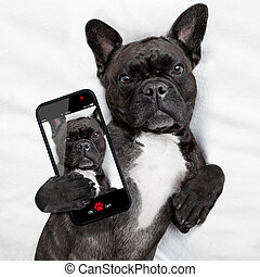 selfie, lit, chien