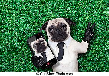 selfie, perro de pug