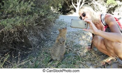 Selfie with Quokka - Smiling tourist takes selfie with at...
