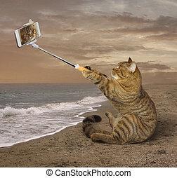 selfies, playa.