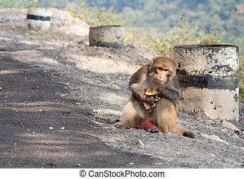 Selfish monkey