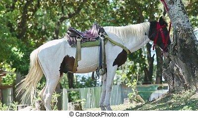 sellé, reposer, deux, chevaux, conjugal, blanc, brun, ...