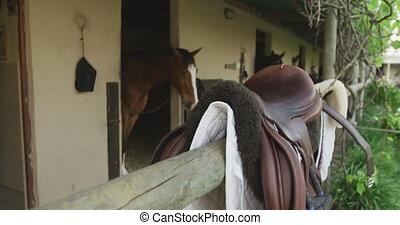 selle, vue, sien, cheval, dressage