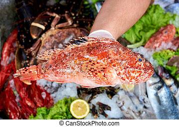 Seller presenting a scorpion fish in fish store