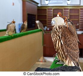 Selling falcons in Waqif Souq market in Doha, Qatar