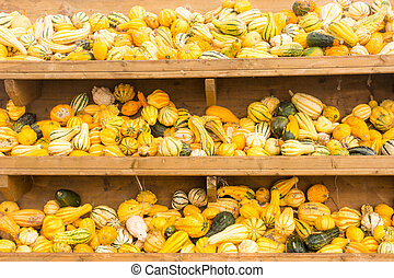 Selling pumpkins at the market