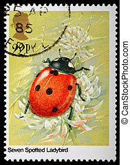 sello, insecto