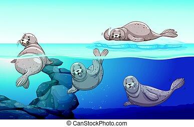 sellos, océano, natación