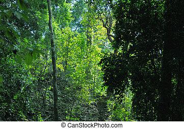 selva, en, honduras