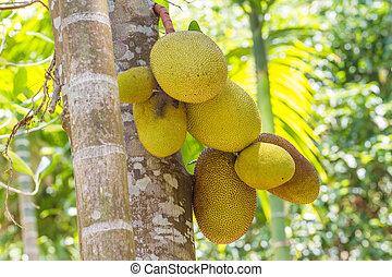 selva, fruta, árvore, jardim, fruta-pão