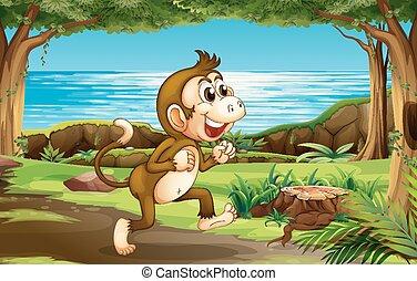 selva, macaco