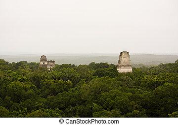selva, peten, mayan, piramides, guatemala, ジャングル, ∥あるいは∥,...