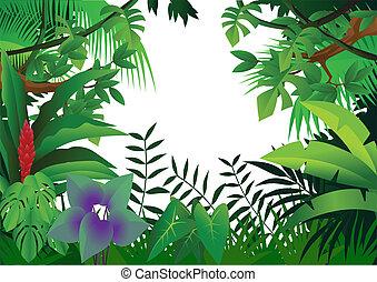 selva, plano de fondo