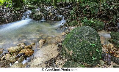 selva, riverscape