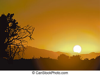 selva tramonto