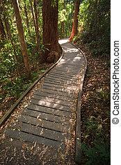 selva tropical, boardwalk, thru