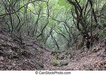 selvagem, árvores