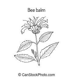 selvagem, bergamota, ou, bálsamo abelha