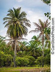 selvagem, coco, crescer, tropicais, palmas, praia, oceânicos, ilha, selva