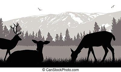selvagem, deers, paisagem, natureza
