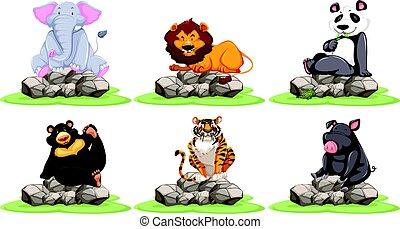 selvagem, diferente, animais, tipos, pedras