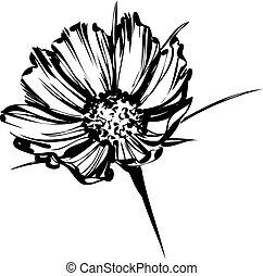 selvagem, esboço, flor