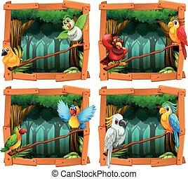 selvagem, floresta, pássaros