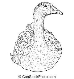 selvagem, goose.