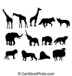 selvagem, jogo, animais