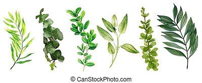 selvagem, luminoso, bindweed, folhas, aquarela, folhagem, ...