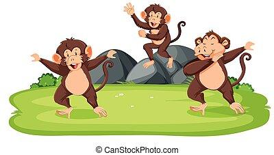 selvagem, macacos