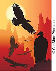selvagem, pássaros, natureza