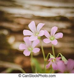 selvagem, pequeno, flor roxa, prado, vindima, retro