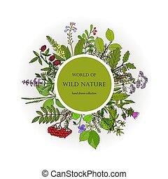 selvagem, plantas, cobrança, natureza