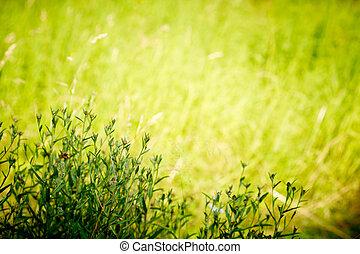 selvagem, plantas, em, profundo, forest., pôr do sol, natural, lighting., com, espaço, para, text.