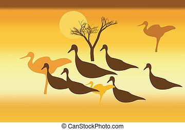 selvagem, silhuetas, pôr do sol, pássaros