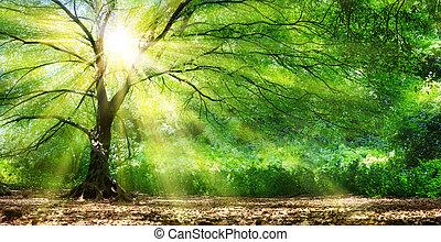 selvagem, sol, floresta árvore
