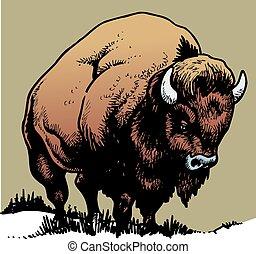 selvagem, touro