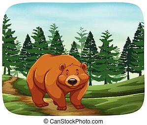 selvagem, urso