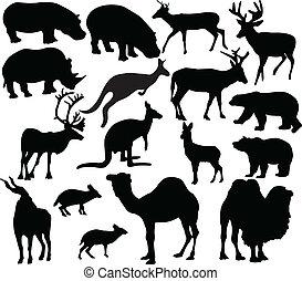 selvagem, vetorial, -, animal