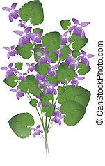 selvagem, violeta