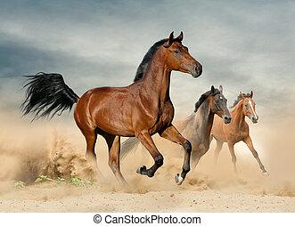 selvatico, bello, cavalli, gregge