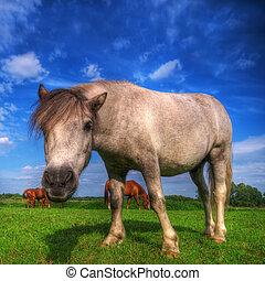 selvatico, campo, cavallo, giovane