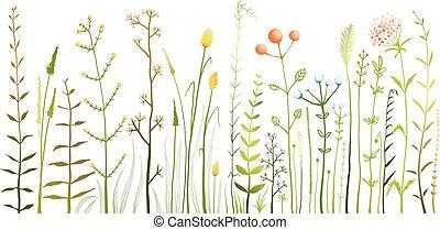 selvatico, campo, fiori, e, erba, bianco, collezione
