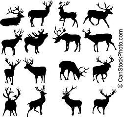 selvatico, cervo