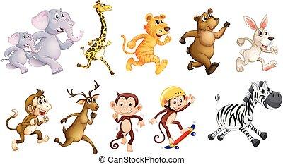 selvatico, correndo, set, animali