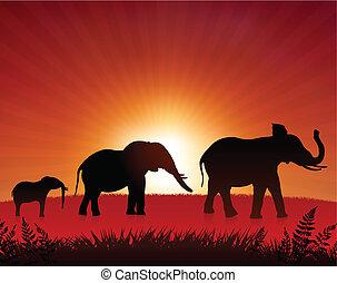 selvatico, elefanti