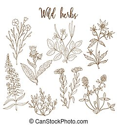 selvatico, erbe, set