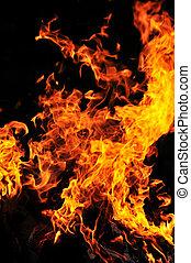 selvatico, fuoco