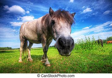 selvatico, giovane, cavallo, su, il, campo